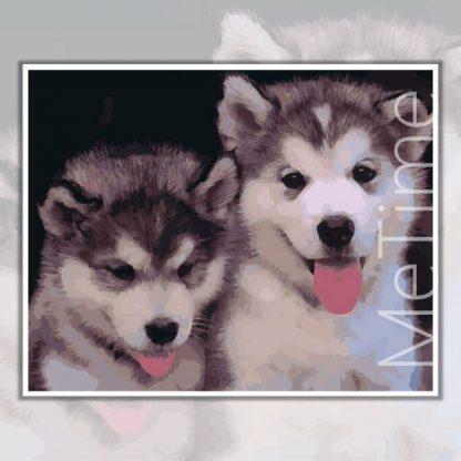 Husky-puppies