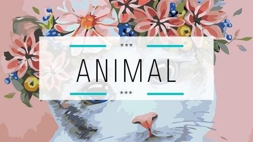 Category - Animal